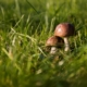 Pilze im eigenen Garten züchten